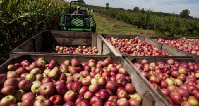 Preocupa el aumento de importaciones de manzanas y vinos